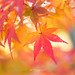 Kyoto in Autumn. by bgfotologue