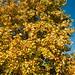 gouden-herfst