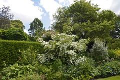 2018.06.20.076 CASTILLON - Les jardins, allée des fleurs