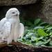 Birdland 7999