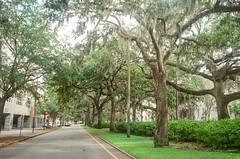 Savannah 2017
