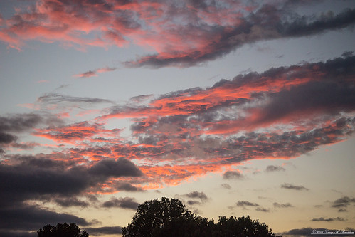 sunset clouds sky red orange silhouette tree blue gray