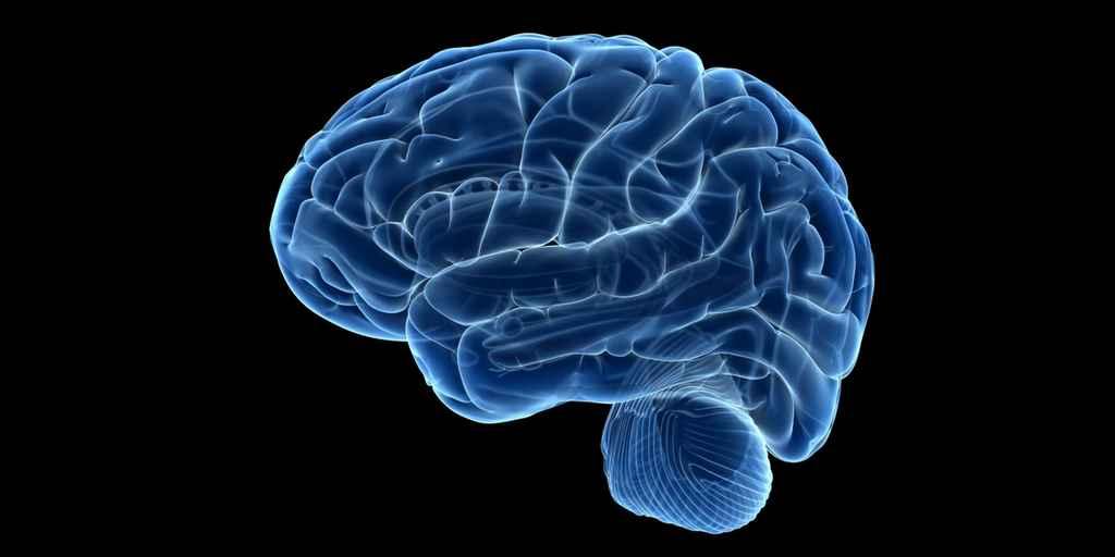 Le virus de la rage pour cartographier le cerveau