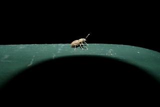 Season's Greetings (from a weevil)