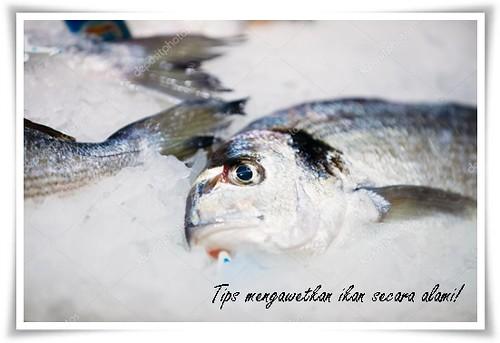 Sering Melihat Ikan Diawetkan Dengan Es Batu? Ini Alasannya