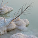 Dead Sea by tanya.klim