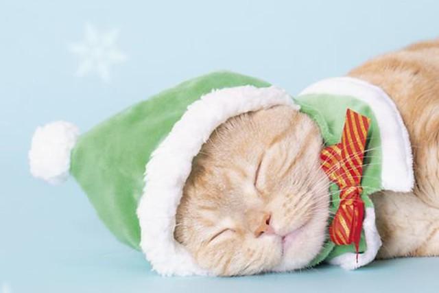 更加浪漫的氛圍! 奇譚俱樂部【可愛貓咪頭套 聖誕節貓~白色聖誕~】專屬貓星人的轉蛋作第26 彈!かわいい かわいい ねこクリスマスちゃん ~ホワイトクリスマス~