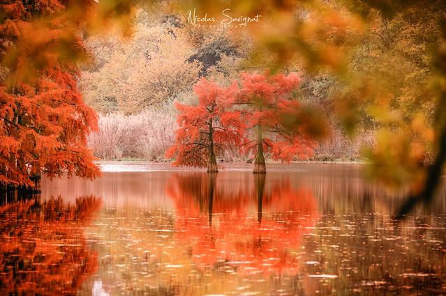 Cyprès Chauve - Autumn 2018