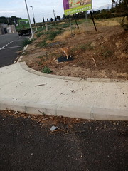 IMG_20180916_082833 - Photo of Montner