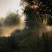 Dreamy scene at the moor, Boxmoor