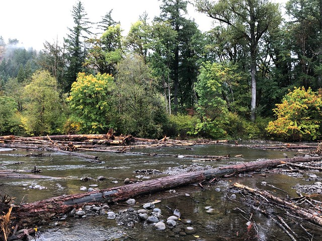 South fork McKenzie restoration project