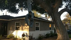 Grasping animatronic tree arms, Burbank, California, USA