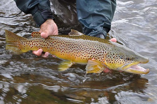 montana-fly-fishing-slideshow-fish-12