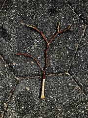 Twig on Street