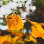 Autumn Bokeh - Tarbek - Schleswig-Holstein - Germany