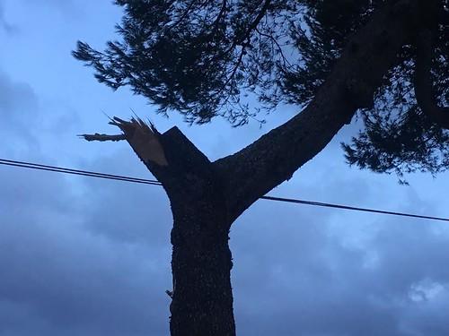 Danni vento a Casamassima (3)