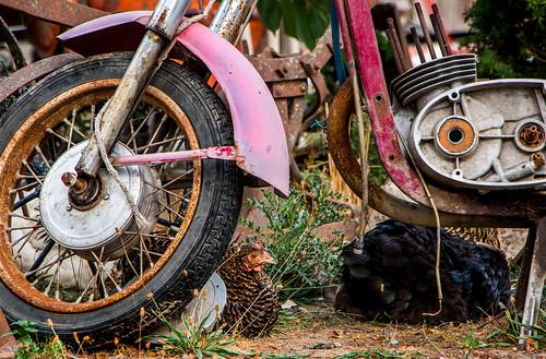 Und die Oma fährt im Hühnerstall Motorrad  Motorrad...