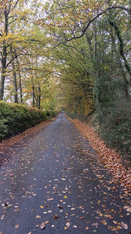 A Dartmoor country lane