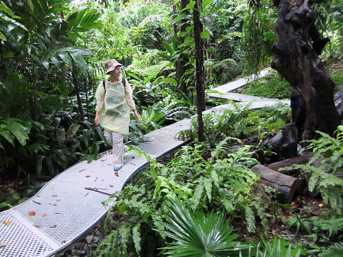 A walkway and complimentary raincoats were provided to walk through Singapore's Botanical Garden in the rain