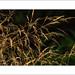 Autuum Grass