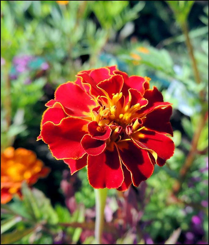 Касарги 8818 Flores.