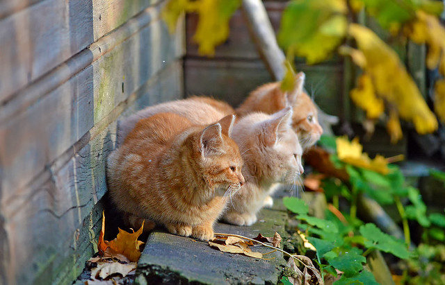 Kittens 🐈🐈🐈  (Autumn cats, cute family). Finland.
