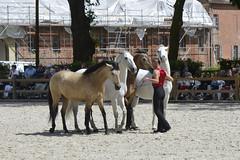 2018.06.21.125 HARAS du PIN - Toma et ses chevaux  de la Cie Atao - Photo of Saint-Germain-de-Clairefeuille