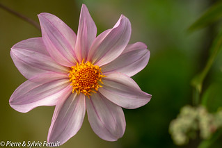 Fleur - Flower - Bloem