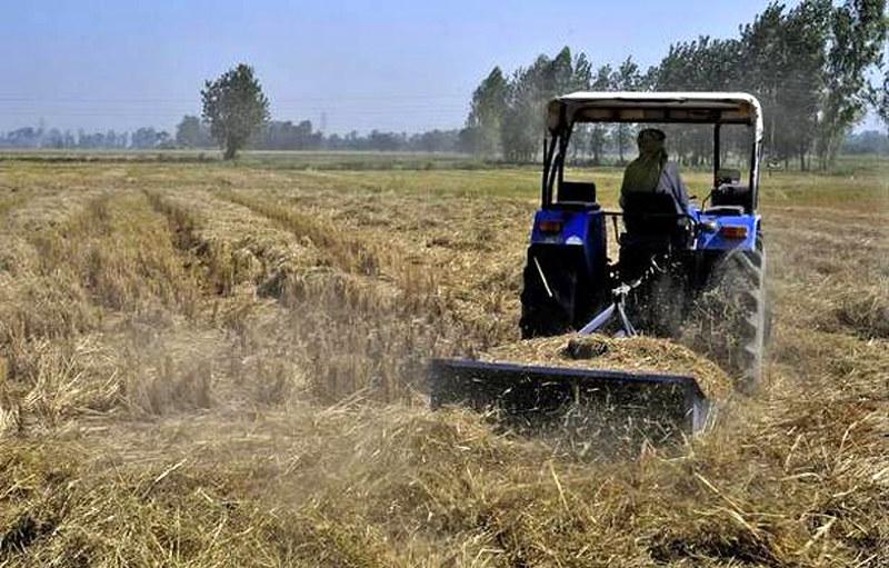 मोहाली में एक किसान धान के खेत में पराली को काटता हुआ