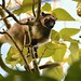 the rare Lumholtz's Tree Kangaroo by cirdantravels (Fons Buts)