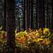 Autumn Sunshine on the Forest Floor.