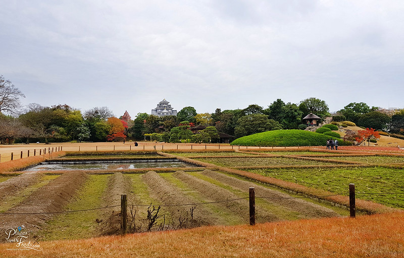 okayama garden castle view