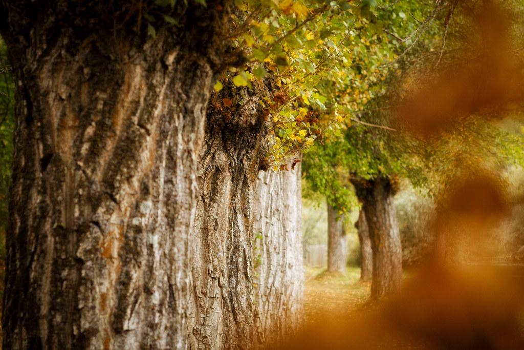 otoño_ocres