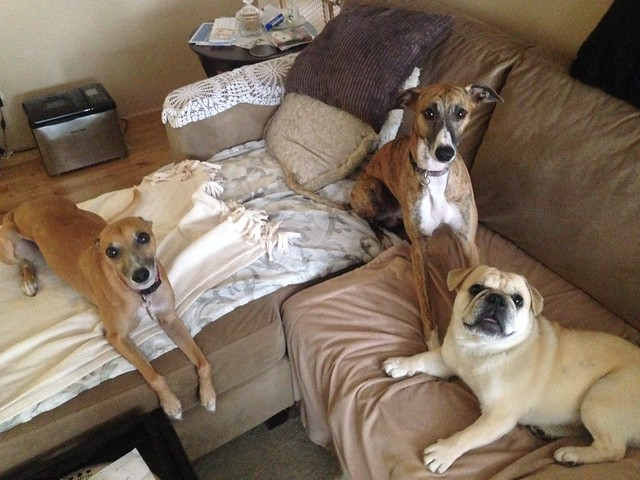 3 puppies!, Apple iPhone 5c, iPhone 5c back camera 4.12mm f/2.4