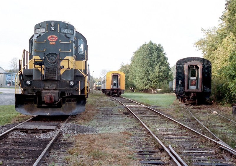 Looking South in the Yard