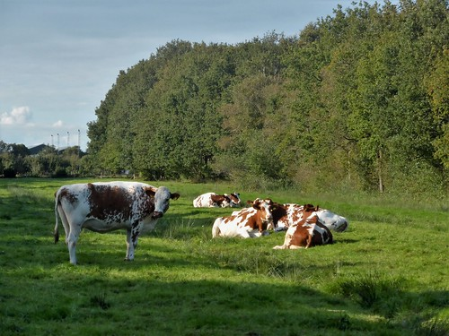 Harichster bos and agriculture