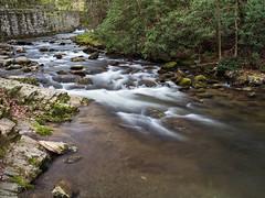 IMGPJ06434C_Fk - Great Smoky Mountain National Park
