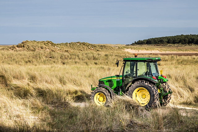 Deere on the Dunes-6475, Canon EOS 80D, Canon EF 70-200mm f/4L IS