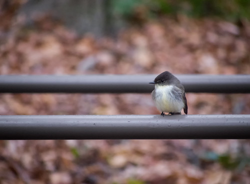Bird on a rail