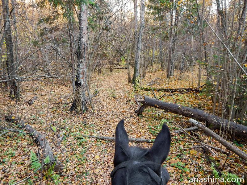 Ушки на макушке, лес, Московская область