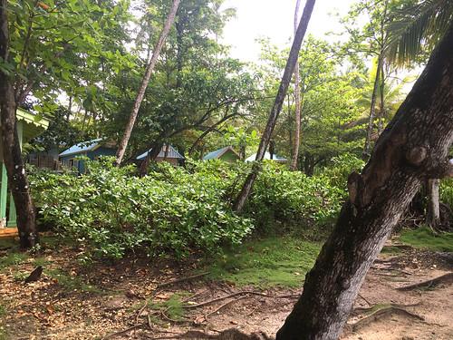 Hütten / Shacks  - Playa Grande - Rio San Juan
