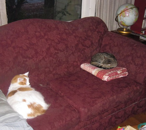 Two dozing cats