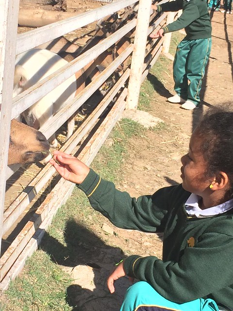 Infantil visita la Granja Escuela El Jarama