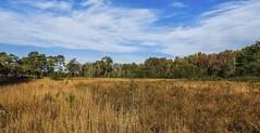 Savannah Site at Refuge