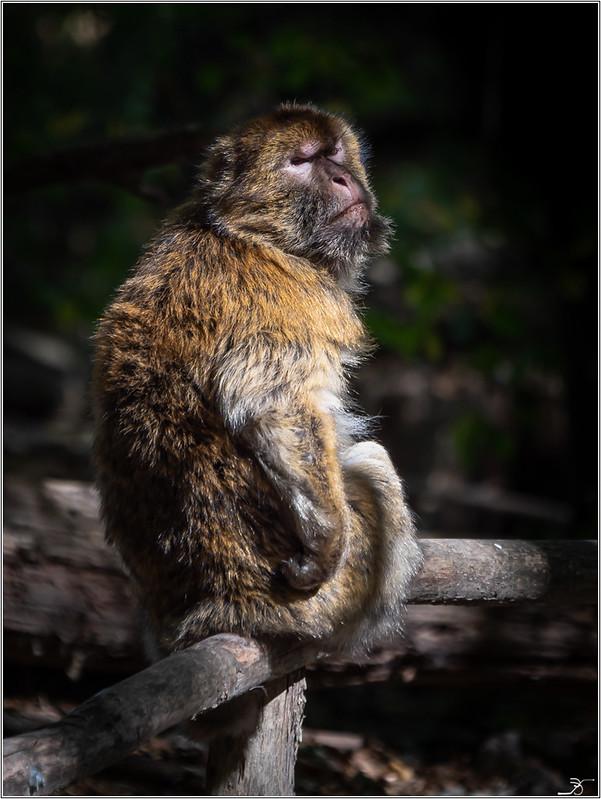 Terre des singes part3 44955718512_54e96127e3_c