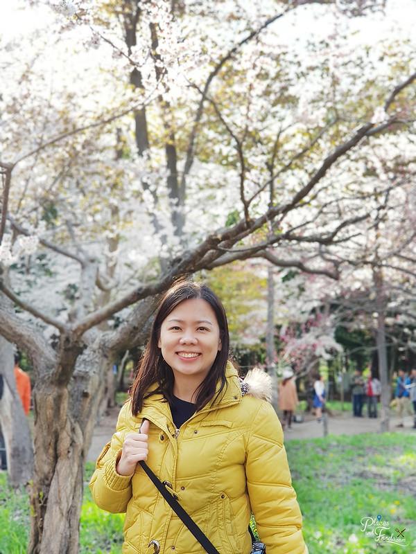 maruyama park sakura places and foods
