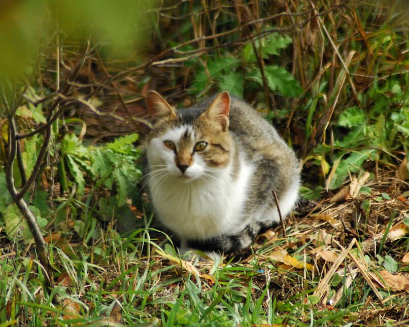 DSC_5706.dad.cat