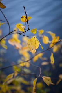 Espoo foliage-2277
