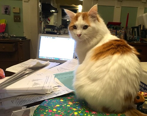 Professor cat helps with the grading