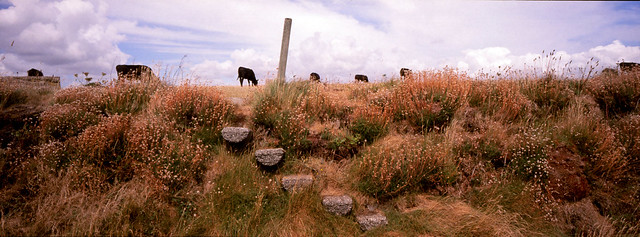 Cornwall Cow Stairs